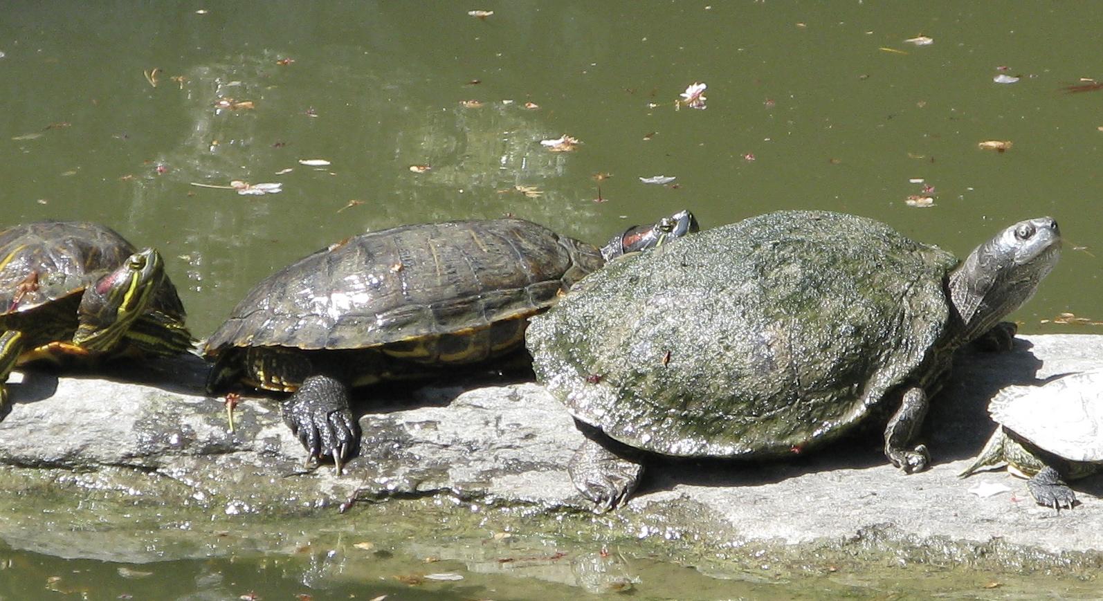 turtles backyard and beyond