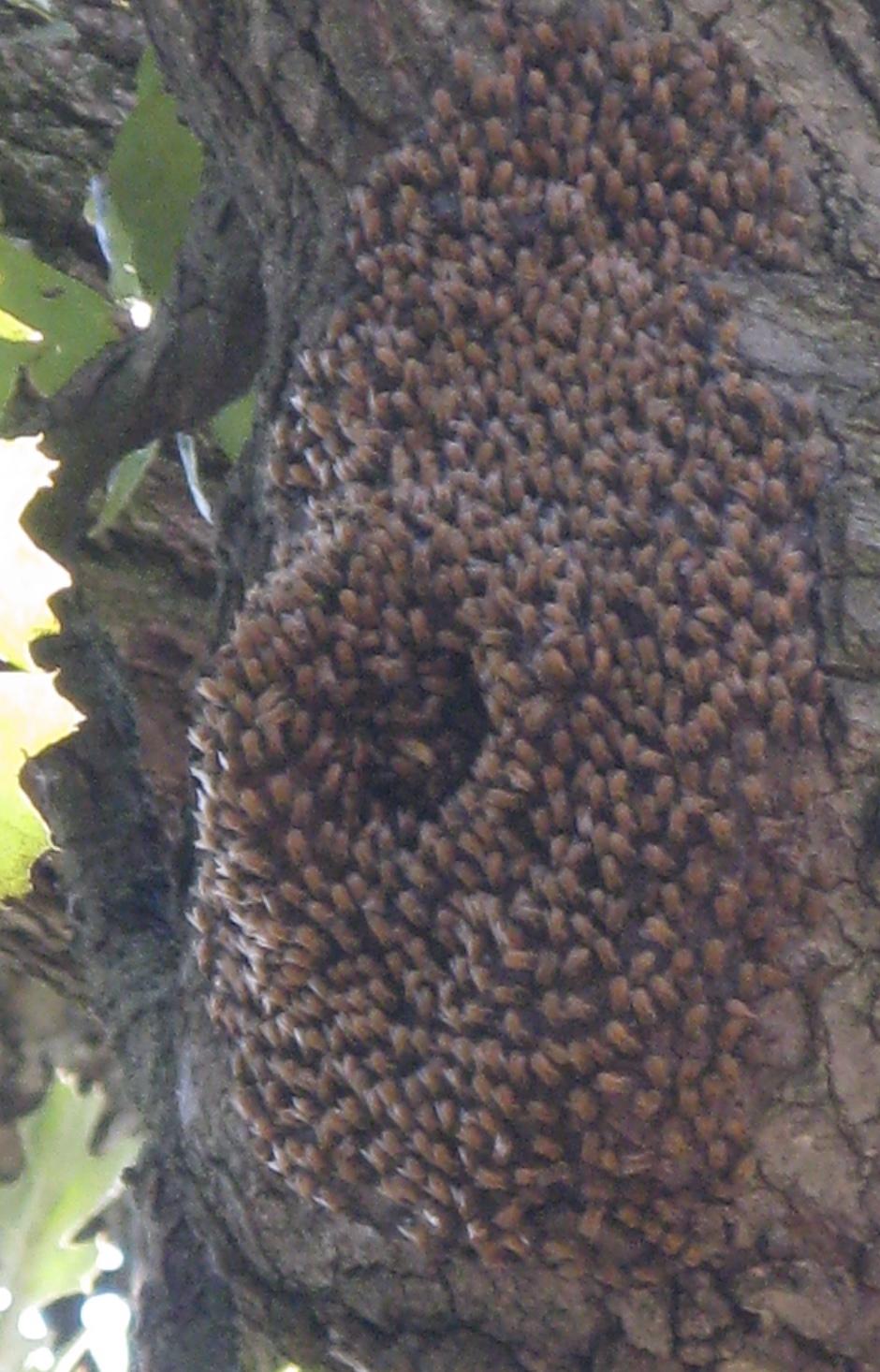 Big Natural Oiled Tits Gifs