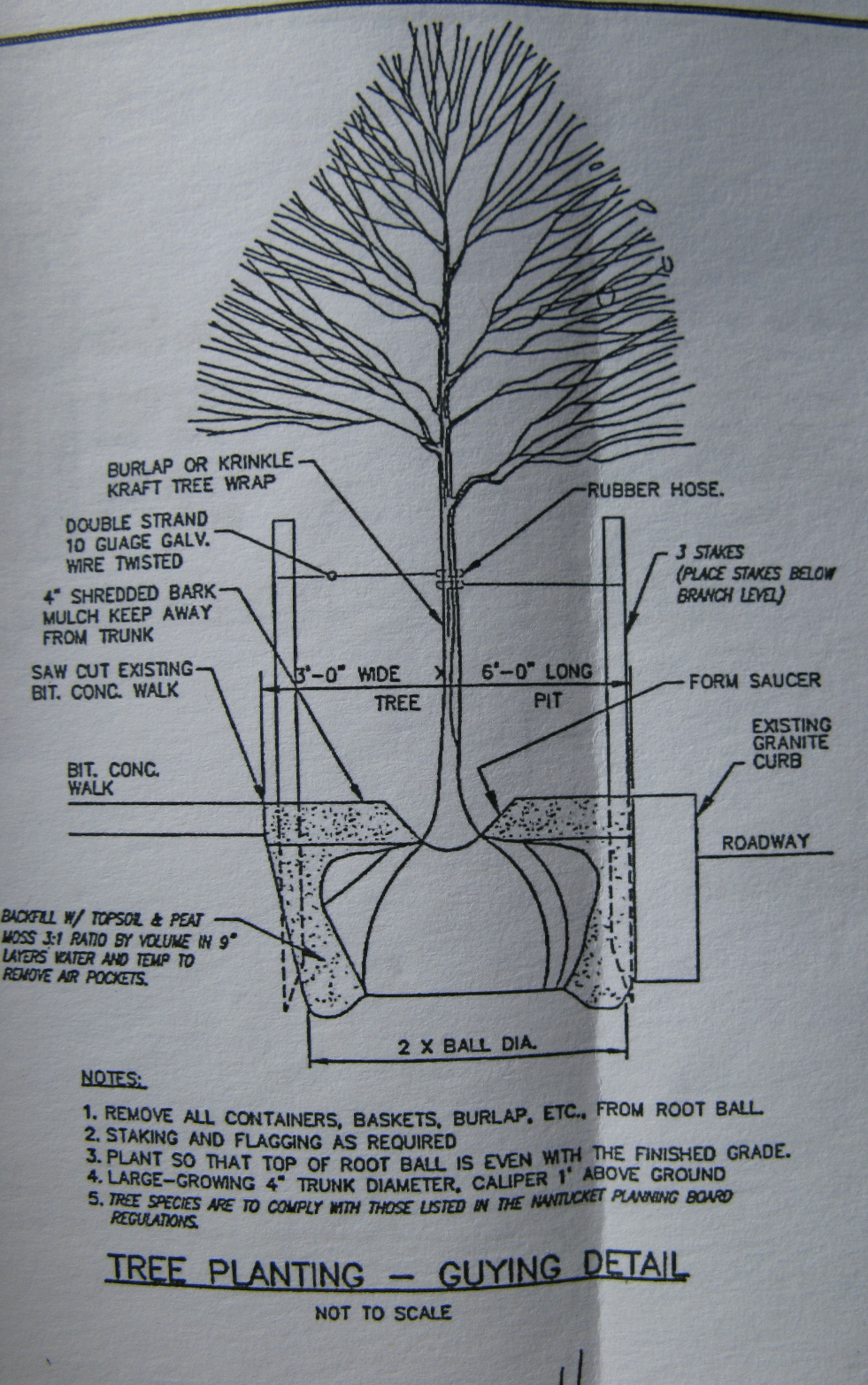 How To Put Up A Fence >> Guying Detail for Arbor Day | Backyard and Beyond