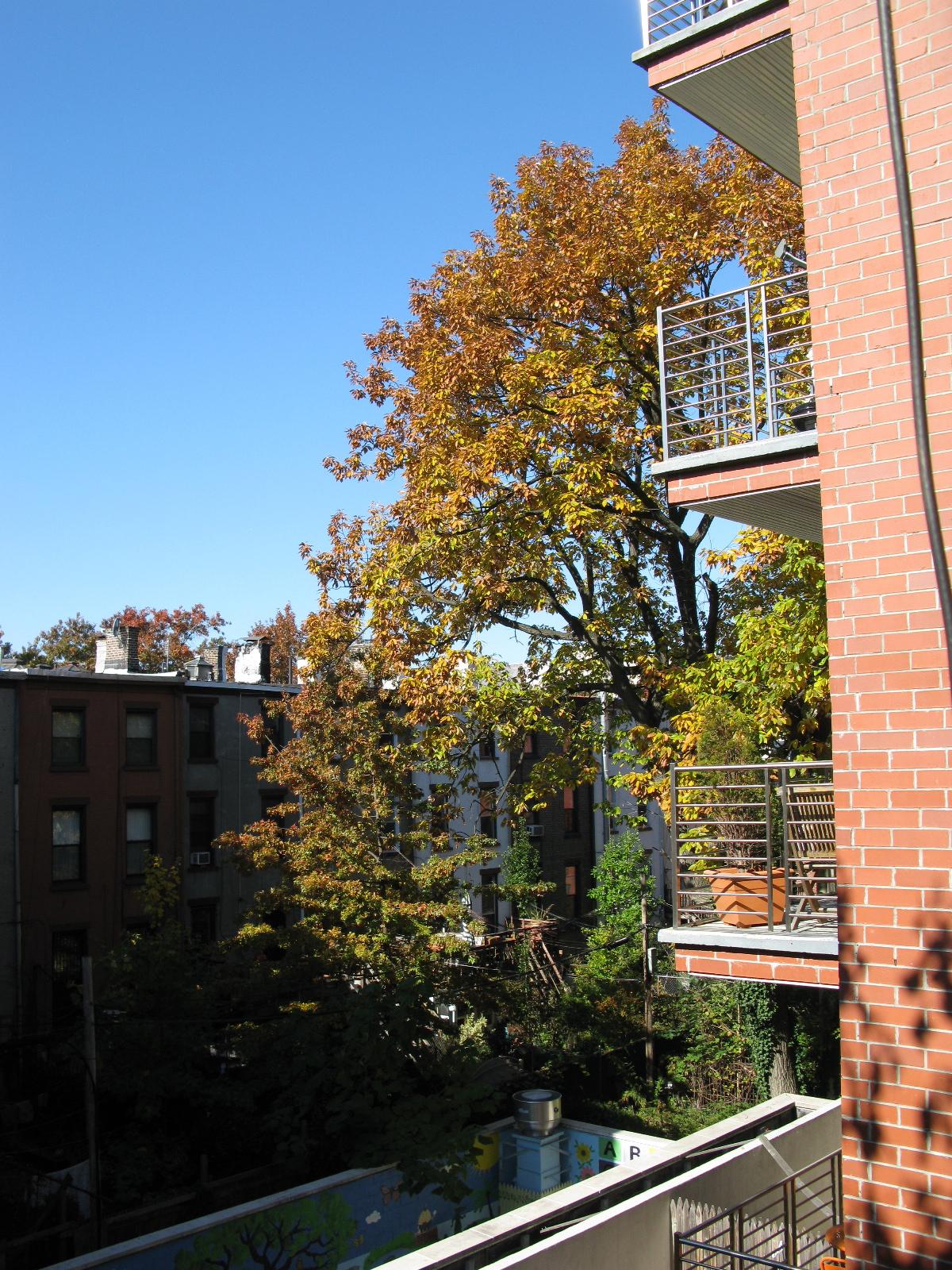 big brooklyn tree backyard and beyond