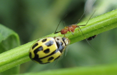 Lady Bug On Green