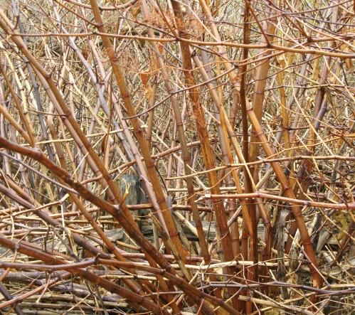 """Nantucket bamboo"""