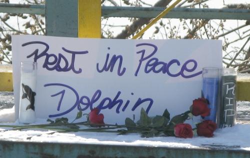 Dolphin memorial