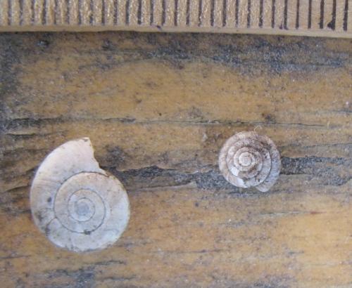 snail6
