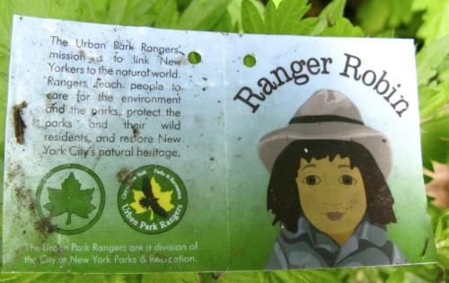 ranger robin