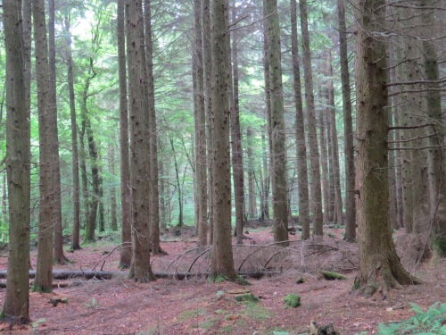 Houndtor Woods