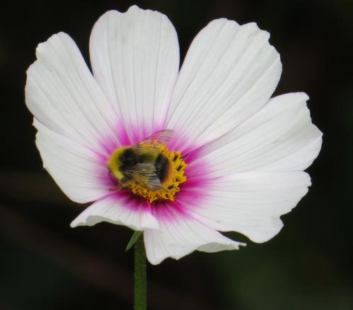 flowerbee