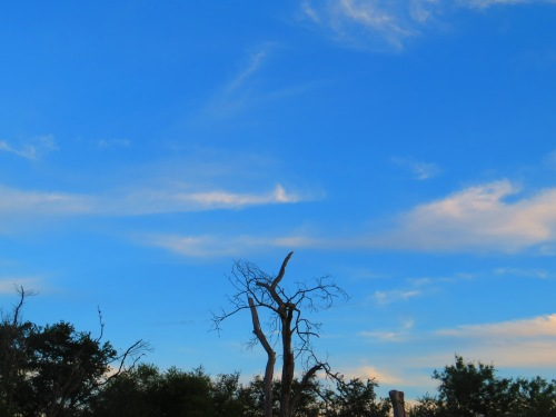 Bentsen State Park