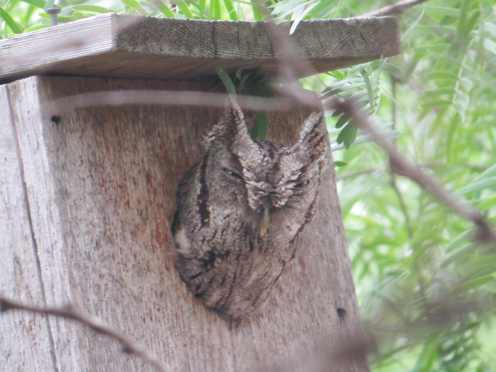 Barn Owl Box Building Plans