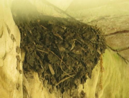 nest3