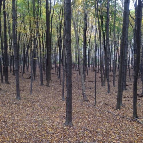 TaurusTrees