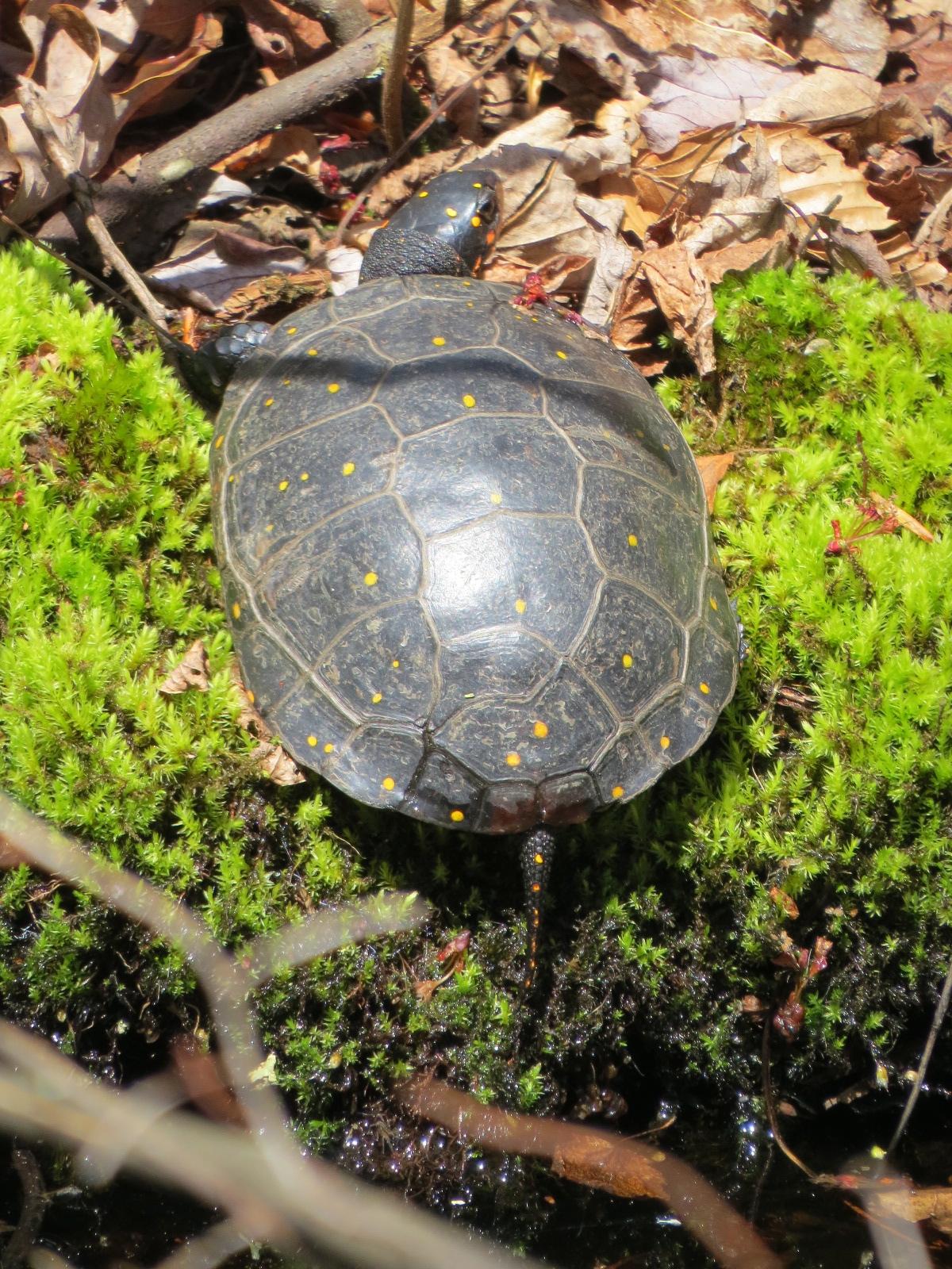 turtles backyard and beyond page 2