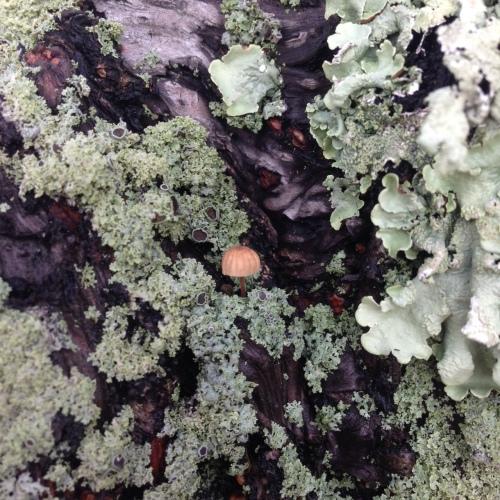 lichen5