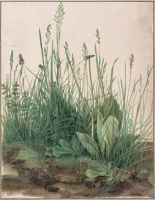 800px-Albrecht_Dürer_-_The_Large_Piece_of_Turf,_1503_-_Google_Art_Project