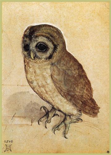 the-little-owl-1506.jpg!Blog