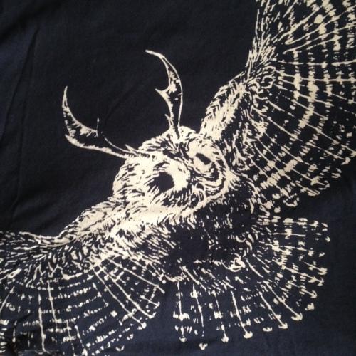 elk owl