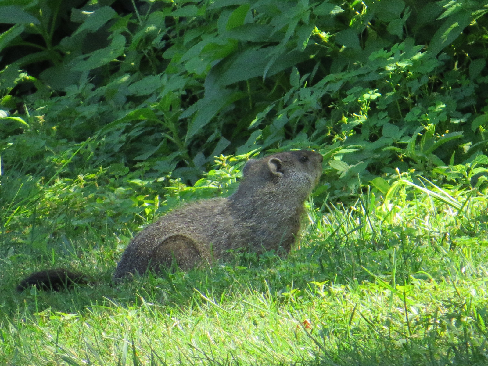 mammals backyard and beyond page 4