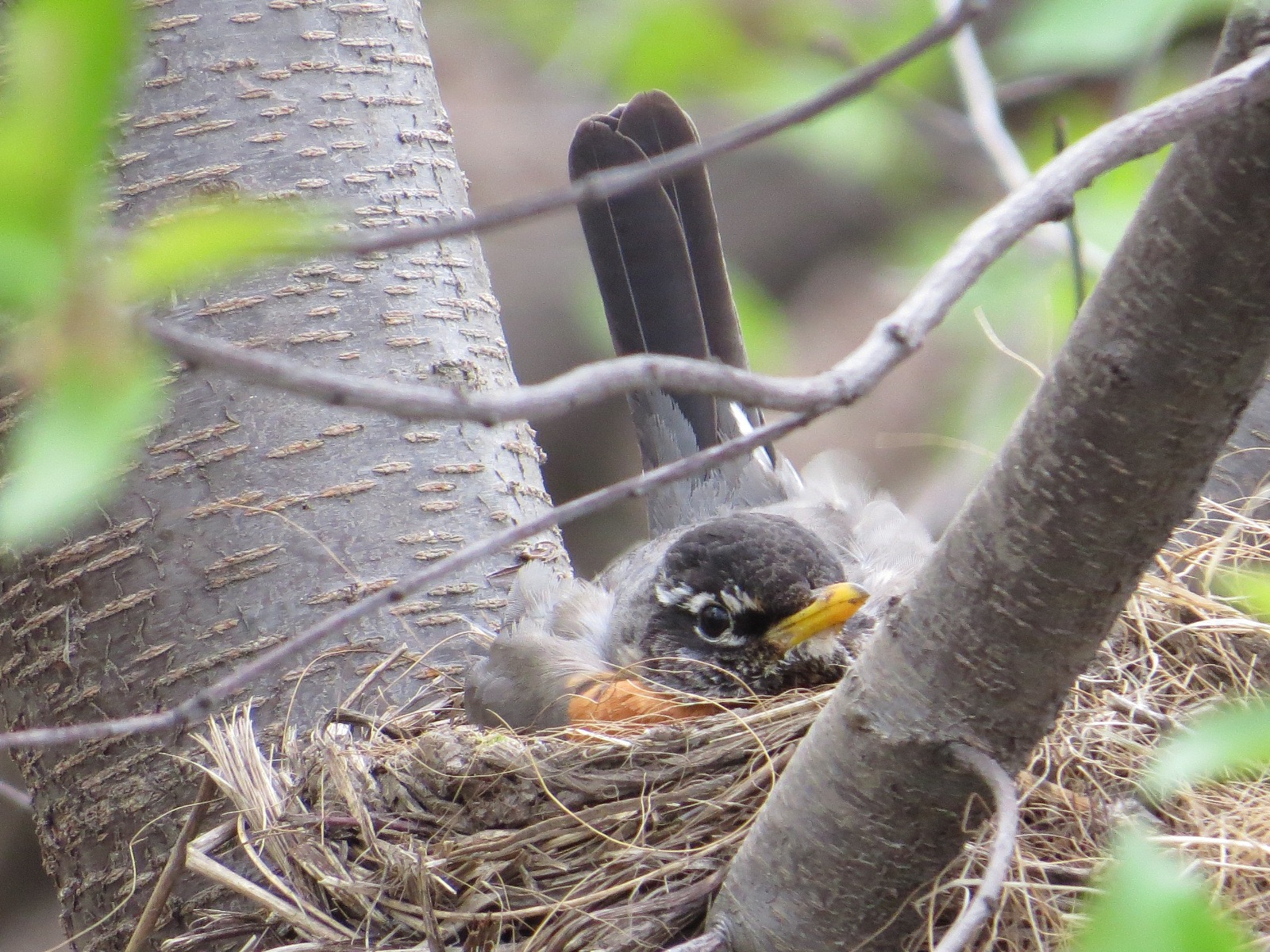 naturalist notes backyard and beyond