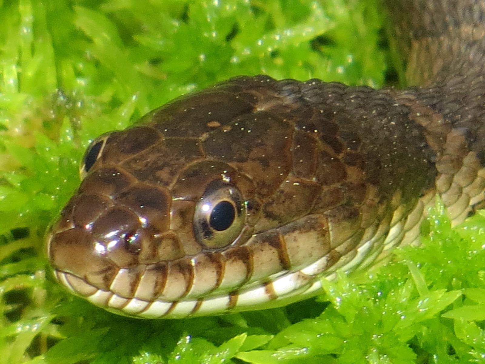 snakes | Backyard and Beyond