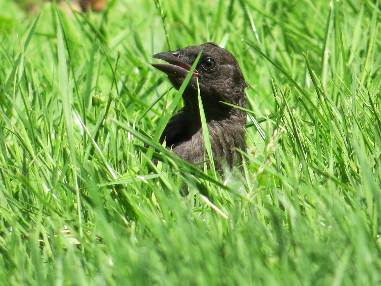 birding backyard and beyond