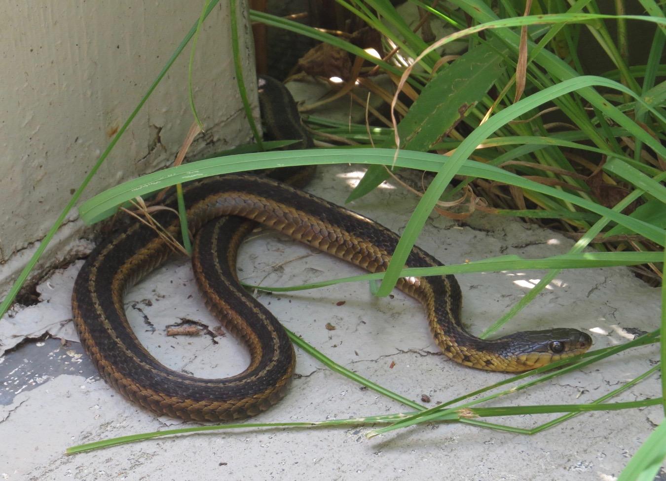 snakes backyard and beyond