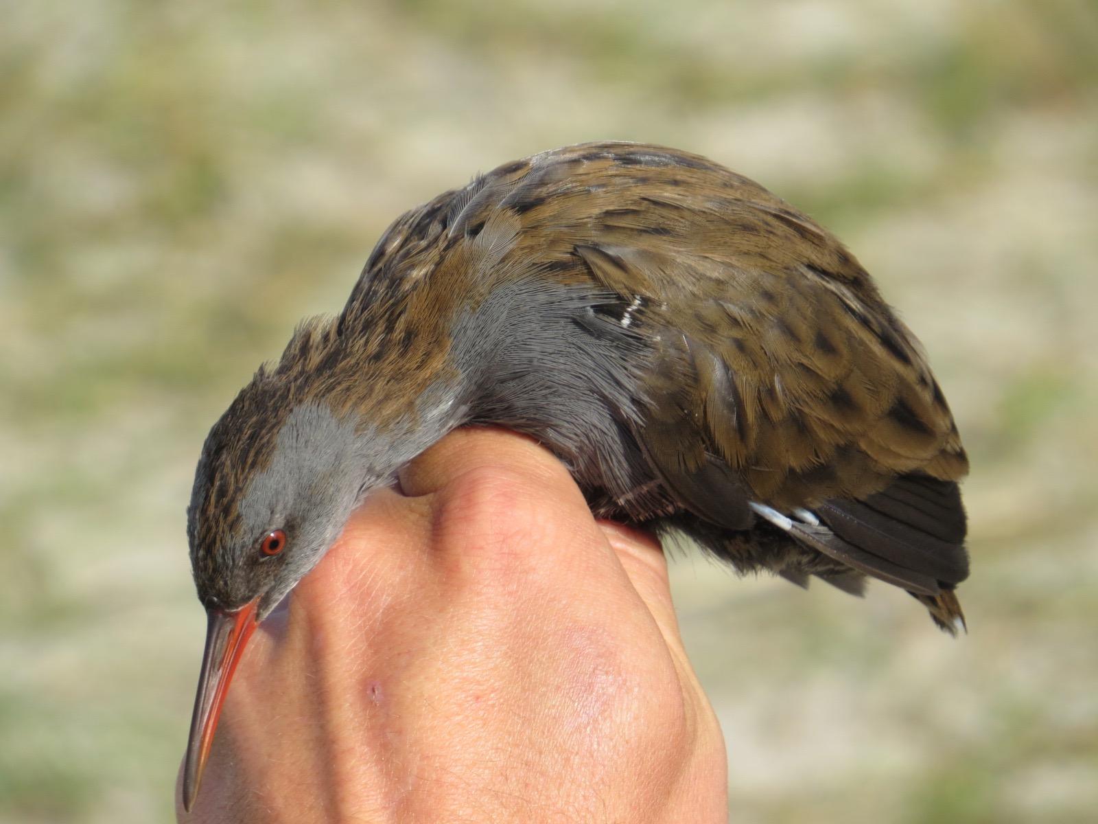 birds in hand iii backyard and beyond