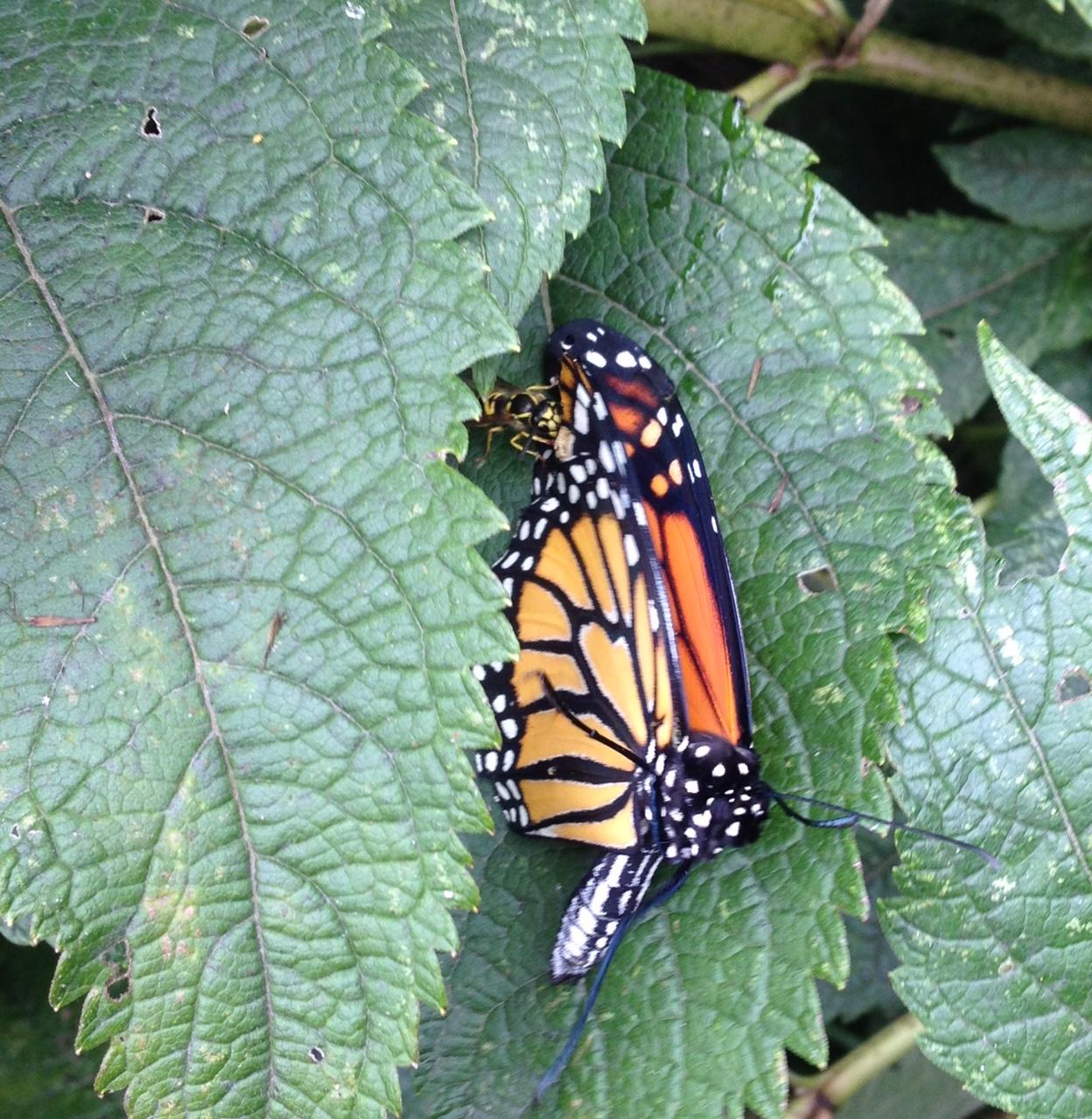Monarch Butterfly Prom Dress Cheap
