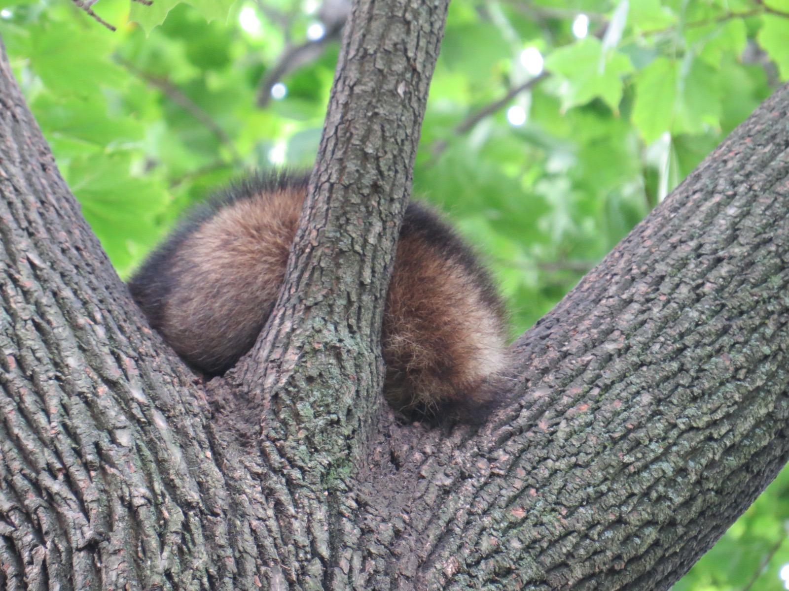 mammals backyard and beyond